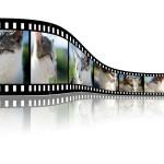 Explainer videos image